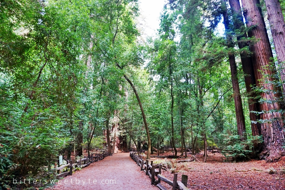 Redwood Park California 13