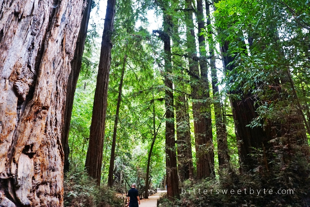 Redwood Park California 17