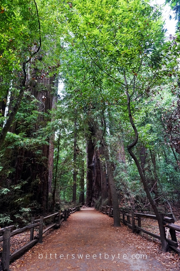 Redwood Park California 19