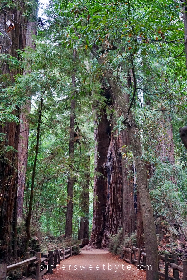 Redwood Park California 20