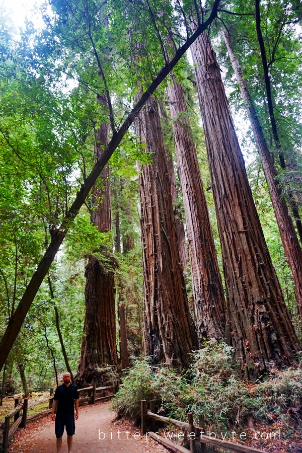 Redwood Park California 24