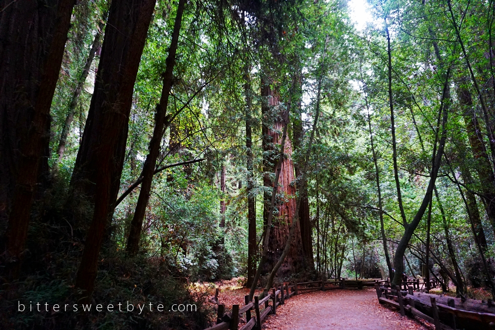 Redwood Park California 26