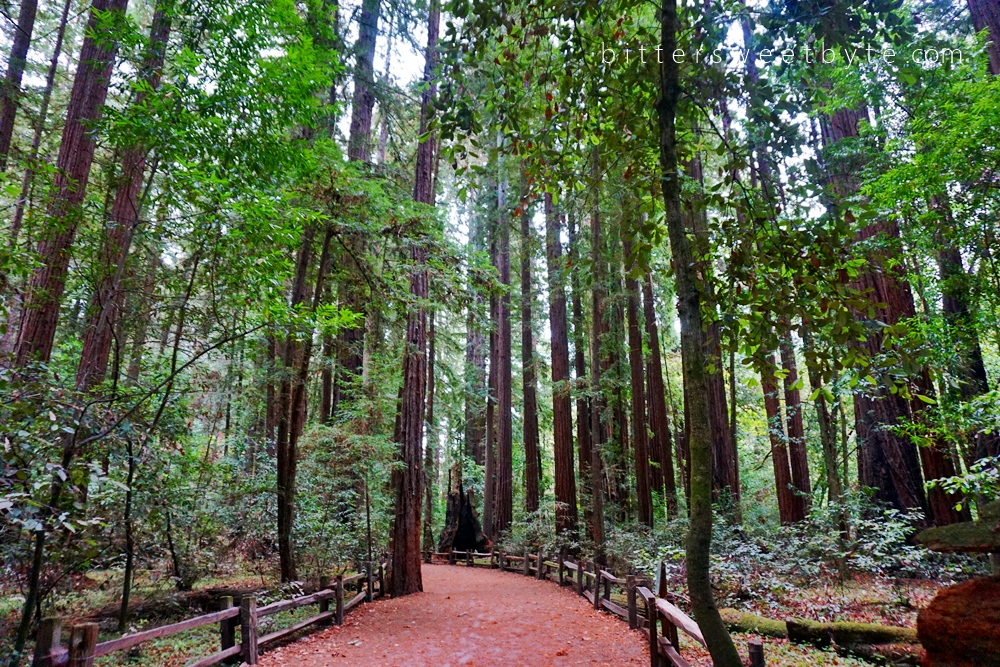 Redwood Park California 28