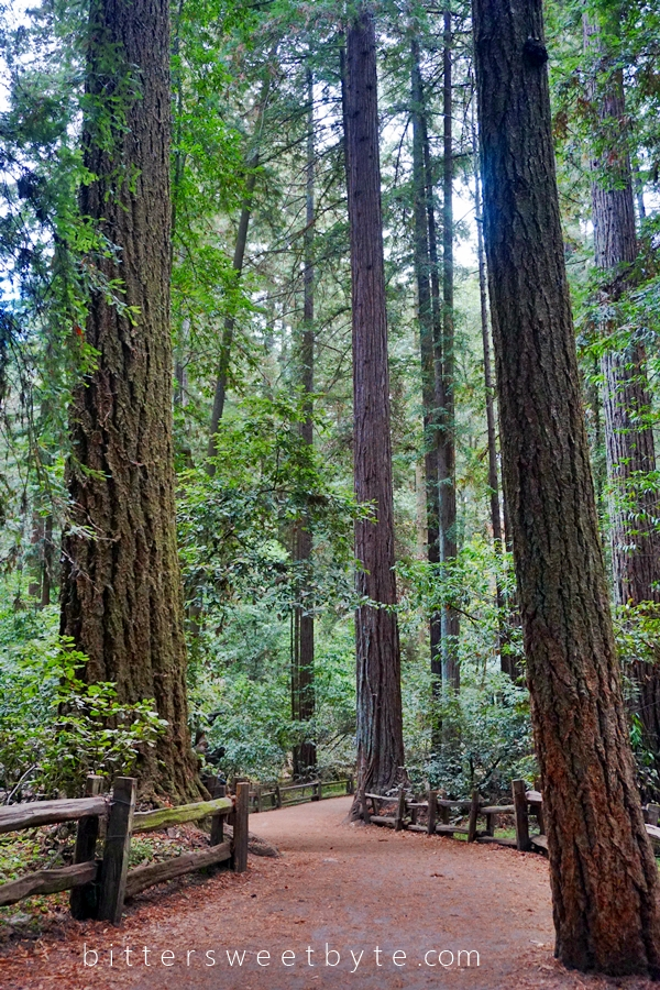 Redwood Park California 29