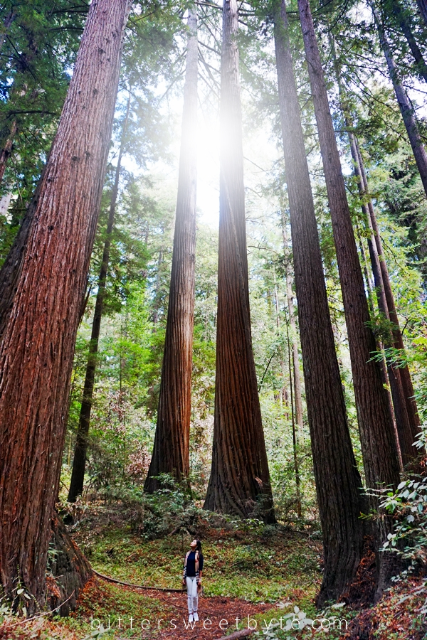 Visit Henry Cowell's Redwood Forest, California.