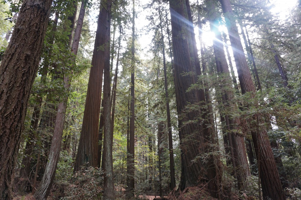 Redwood Park California 38