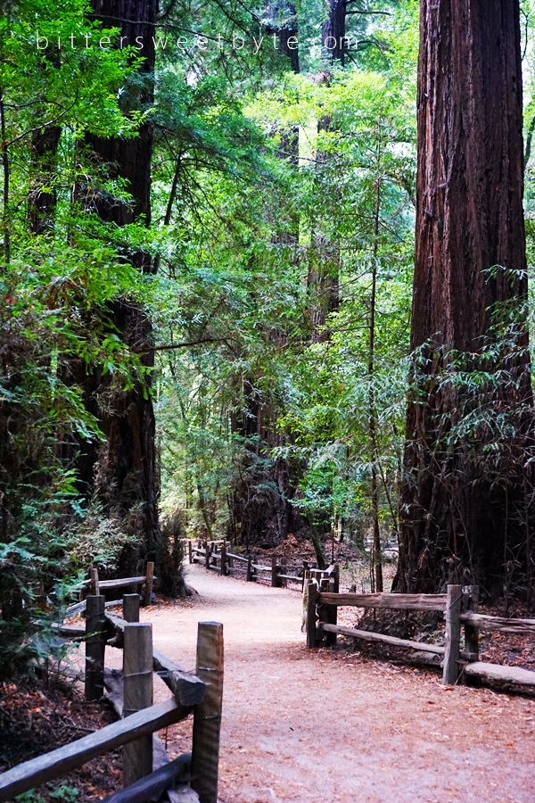 Redwood Park California 42