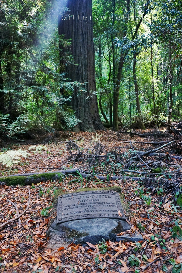 Redwood Park California 44