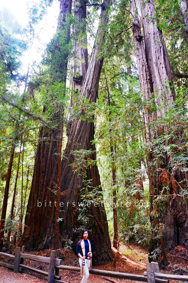 Redwood Park California 6