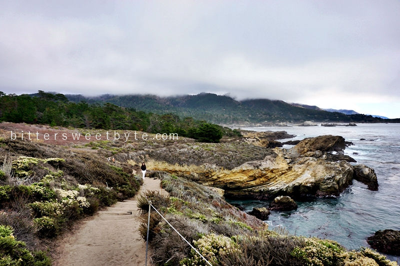 Point Lobos 11