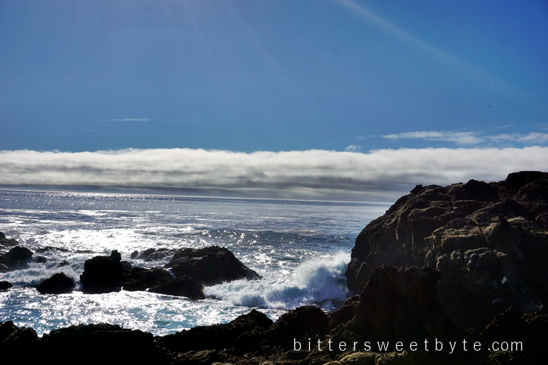 Point Lobos 3