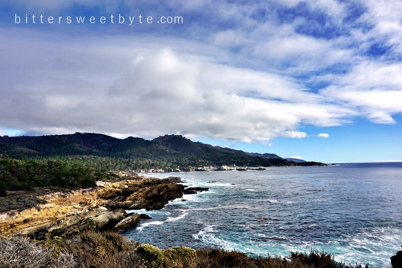 Point Lobos 7