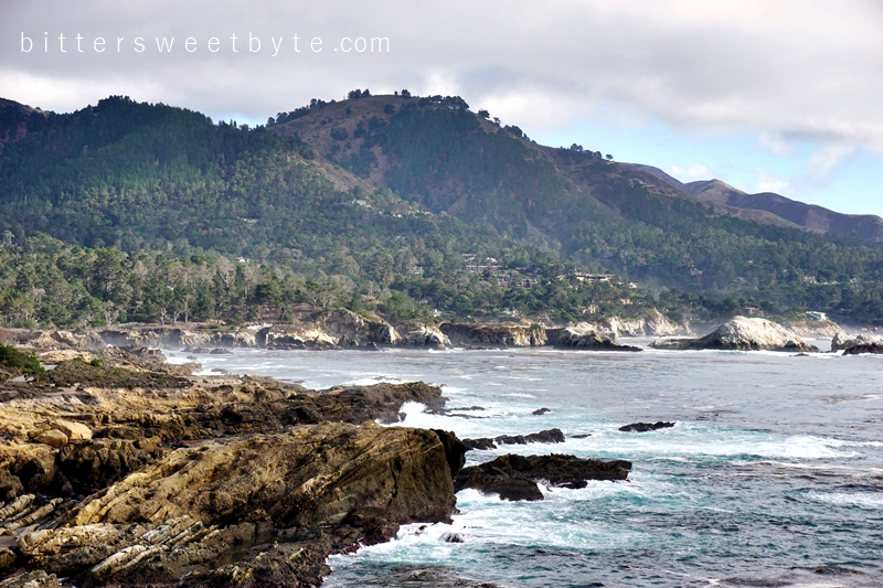 Point Lobos 8