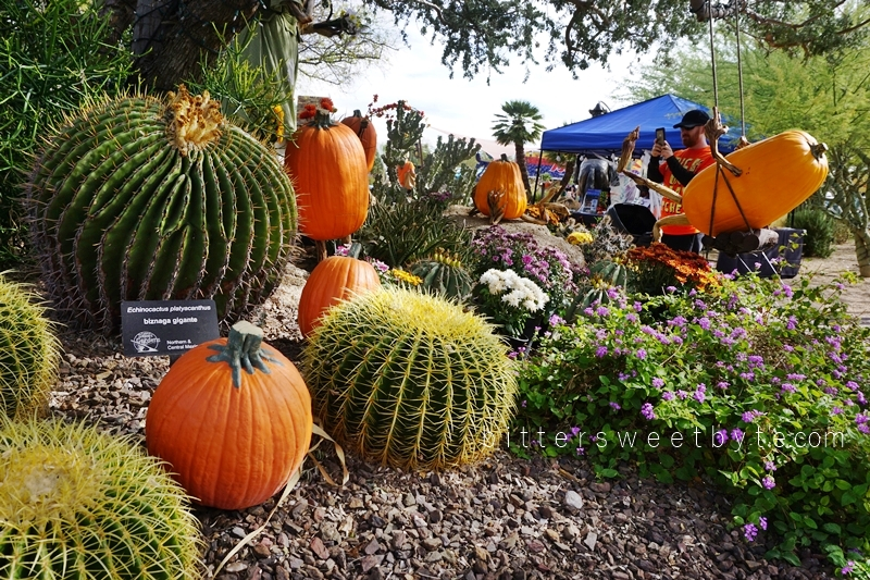 carefree-the-enchanted-town-arizona-halloween-edition028