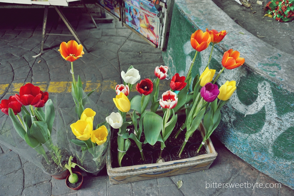 Tulips in mexico city